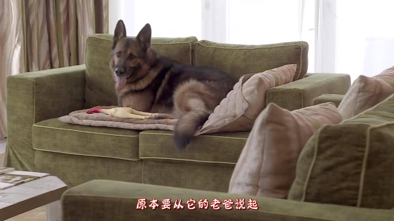 """[视频]""""狗""""中的富豪 有25亿人民币 天天开跑车住豪宅"""