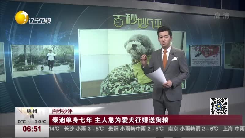 [视频]泰迪单身七年 主人急为爱犬征婚送狗粮