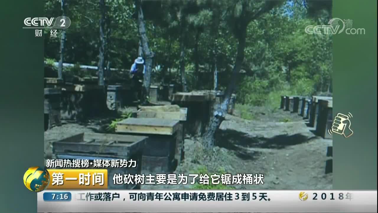 """[视频]云南:砍树直播当""""网红"""" 却招来森林公安"""
