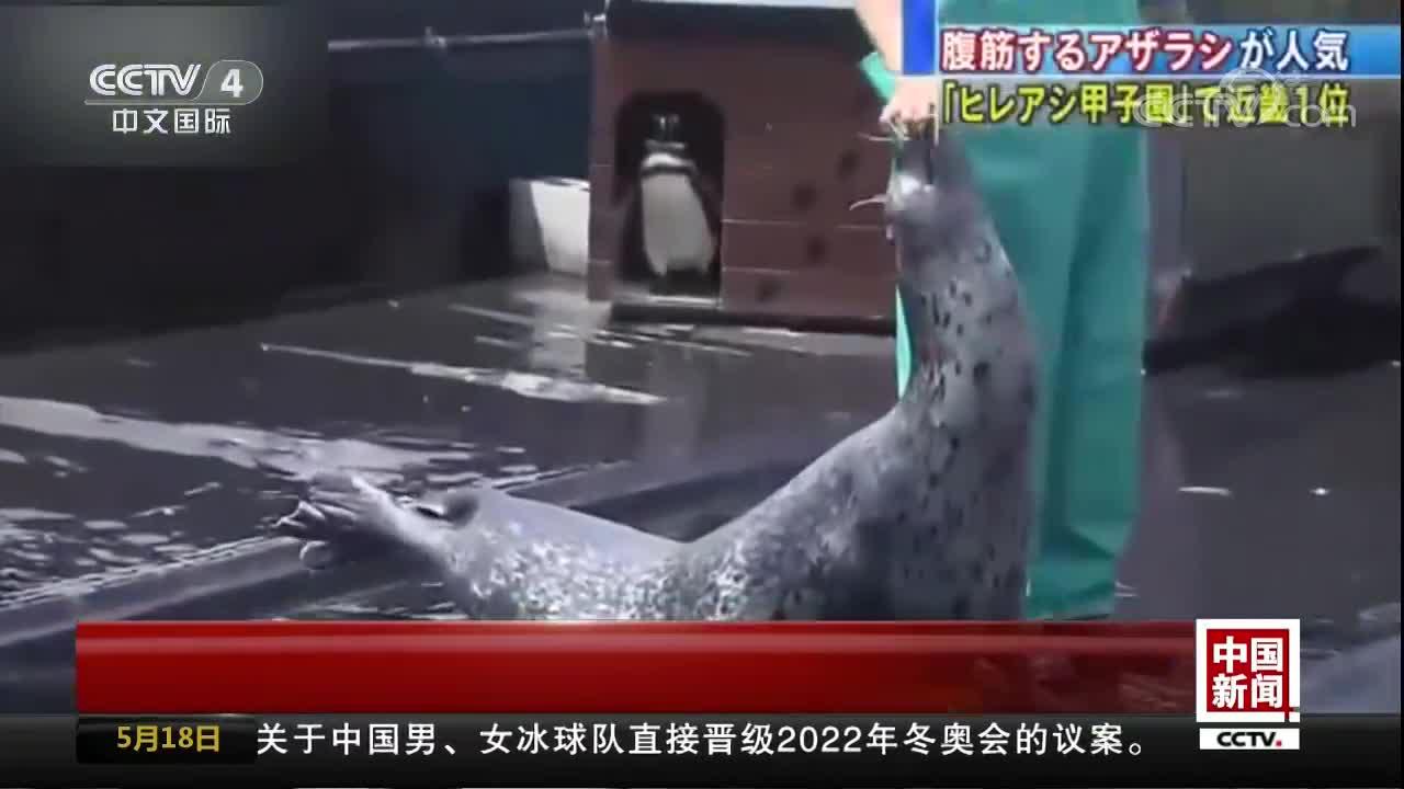 [视频]还在羡慕腹肌? 海豹都会仰卧起坐了
