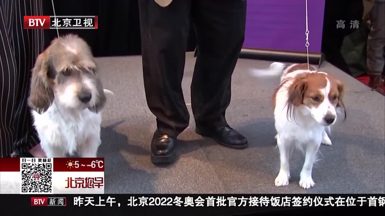 [视频]美国威斯敏斯特狗展添加两个新犬种
